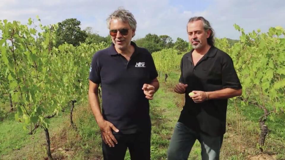 Bocelli Harvest